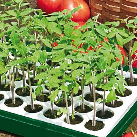 free-vegetable-garden-starter-kits
